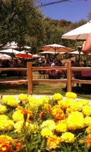 Picnic area with flowers in foreground